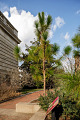 View Pinus palustris digital asset: Photographed by: Hannele Lahti