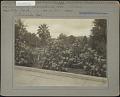 View City Park: Viburnum (Laurustinus), variety Tinus digital asset: City Park [photoprint]