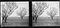 View The Chimneys collection digital asset: [Washington Monument] [slide]
