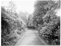 View [Miscellaneous Sites in Oxford, England]: an unidentified garden, probably the University of Oxford Botanic Garden or the Magdalen College gardens. digital asset: [Miscellaneous Sites in Oxford, England] [glass negatives]: an unidentified garden, probably the University of Oxford Botanic Garden or the Magdalen College gardens.
