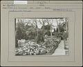 View Cummer Garden: Azaleas digital asset: Cummer Garden [photoprint]
