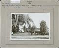 View Holmes Nursery: Taxus and holly digital asset: Holmes Nursery [photoprint]