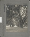 View Audubon Park & Zoological Garden digital asset: Audubon Park & Zoological Garden [photoprint]