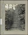 View Rockmarge: Garden steps with Linaria, cymbalaria, hemerocallis, pachysandra, rhododendron digital asset: Rockmarge [photoprint] Linaria; cymblaria; hemeocallis; pacasandra; rhododendron.