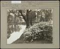 View West End Park: Azalea nudiflora digital asset: West End Park [photoprint]