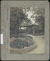 View Bayard Cutting Arboretum: Euonymus radicans digital asset: Bayard Cutting Arboretum [photoprint]: Euonymous.