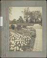 View Prospect Park: Tulip bed digital asset: Prospect Park [photoprint]
