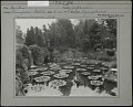 View [Sonnenberg Gardens]: overhead view of the lily pond in the Japanese garden digital asset: [Sonnenberg Gardens] [photographic print]: overhead view of the lily pond in the Japanese garden.