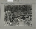 View [Sonnenberg Gardens]: the lily pond and waterfall in the Japanese garden digital asset: [Sonnenberg Gardens] [photographic print]: the lily pond and waterfall in the Japanese garden.