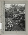 View [The Point]: tulips, a wall garden, and trees beyond. digital asset: [The Point] [photographic print]: tulips, a wall garden, and trees beyond.