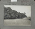 View [Harbor Hill] digital asset: [Harbor Hill] [photoprint]