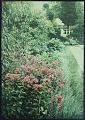 View Westbury House: Phlox R. P. Struthers. digital asset: Westbury House [photonegative]: Phlox R. P. Struthers.