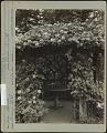 View [Breeze Hill]: Table inside of Rose (Bess Lovett) arbor. digital asset: [Breeze Hill] [photographic print]: Table inside of Rose (Bess Lovett) arbor.