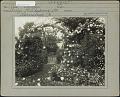 View [Breeze Hill]: Garden gateway; Climbing roses. digital asset: [Breeze Hill] [photographic print]: Garden gateway; Climbing roses.