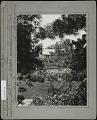 View [Breeze Hill]: View of house, lily pond, and irises framed by tree branches. digital asset: [Breeze Hill] [photographic print]: View of house, lily pond, and irises framed by tree branches.