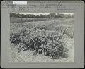 View Fordhook Farms digital asset: Fordhook Farms [photoprint]