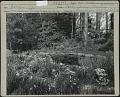 View Aspegren Garden digital asset: Aspegren Garden [photoprint]