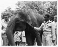 "View Folder 5 Indian Elephant. ""Ambika,"" 1959-1964 digital asset: Indian Elephant, ""Ambika,"" with people, 1959-1964"