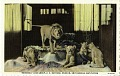 View Postcard of Roosevelt Lion Group digital asset number 0