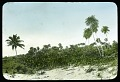 View Mexico, c. 1890s-1900s - Unidentified (19 glass plate negatives) digital asset: Unidentified Beach [Image no. SIA2011-2068]