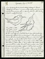 View Cyanerpes (Honeycreepers), one page on