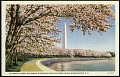 View Postcard of Japanese Cherry Blossoms on Riverside Drive digital asset number 0