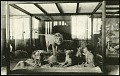 View Postcard of African Lions digital asset number 0