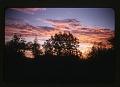 View Pronghorn Antelope; Oklahoma National Wildlife Refuge; Washington State Blue Mountains Vegetation, 1947-1954 digital asset: Sunset at Weikswood, by Helmut K. Buechner, September 1952. [Image no. SIA2014-00009]