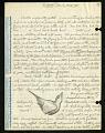 View Saltator (birds), Frijoles and Barro Colorado Island, Panama, 1962 digital asset number 3
