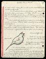 View Saltator (birds), Frijoles and Barro Colorado Island, Panama, 1962 digital asset number 5