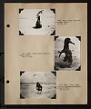 View Album 1 Pacific Islands, 1923 (Tanager Expedition), volume 2 digital asset number 6