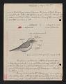 View Atlapetes (Bush finches), Cerro Punta, Panama; Iquitos, Peru; Pichincha, Ecuador, 1958, 1960-1962 digital asset number 9