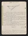 View Atlapetes (Bush finches), Cerro Punta, Panama; Iquitos, Peru; Pichincha, Ecuador, 1958, 1960-1962 digital asset number 1