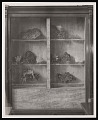View Minerals Exhibit, SI Commons, Smithsonian Institution Building, or Castle digital asset number 0