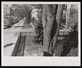 View Southwest Corner of Victorian Garden in the South Yard digital asset number 0