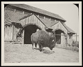 View National Zoological Park, Buffalo Barn digital asset number 0