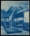 View Mammals Exhibits, Natural History Building - Giraffe digital asset number 0
