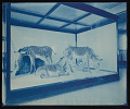 View Mammals Exhibits, Natural History Building - Grevy's Zebra Group digital asset number 0