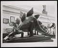 View Vertebrate Fossil Exhibit, Division of Paleontology, Natural History Building - Stegosaurus Model digital asset number 0