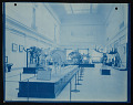 View Vertebrate Fossil Exhibits, Division of Paleontology, Natural History Building digital asset number 0