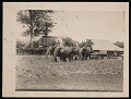 View Riders and Elephants Pulling Carts, Africa digital asset number 0