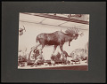 View Pan-American Exposition, Buffalo, New York, 1901 digital asset number 0