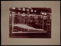 View Louisiana Purchase Exposition, St. Louis, Missouri, 1904 digital asset number 0