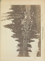 View Random records of a lifetime, 1846-1931 [actually 1932] volume III, part I-II, Yellowstone explorations, 1872-1878 digital asset number 4