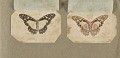 View Butterflies collected in the Shire Valley, East Africa [graphic] / HW digital asset number 3