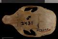 View Tamiasciurus hudsonicus fremonti digital asset number 6