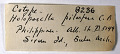 View Holoporella pilacfera Canu & Bassler, 1929 digital asset number 1