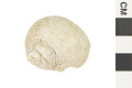 View Turban Shell digital asset number 0