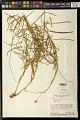 View Monnina stenophylla A. St.-Hil. digital asset number 0