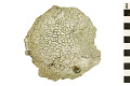 View Fossil Tabulate Coral digital asset number 0